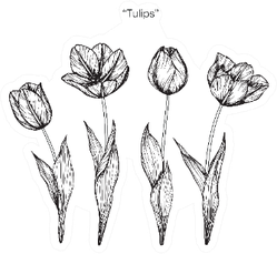 Hand Drawn And Sketch Tulips Flowers Sticker