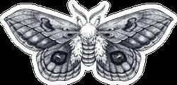 Hand Drawn Butterfly Tattoo Sticker