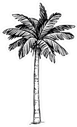 Hand Drawn Coconut Palm Tree Sticker