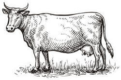 Hand Drawn Cow. Sketch Vector Illustration Sticker