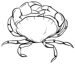 Hand Drawn Crab Line Drawing Sticker
