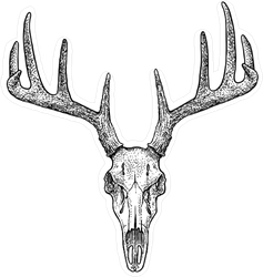 Hand Drawn Deer Skull Illustration Sticker