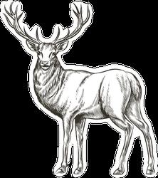 Hand Drawn Deer Sticker