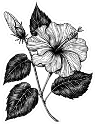 Hand Drawn Hibiscus Flower Sticker