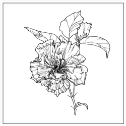 Hand Drawn Illustrated Hibiscus Branch With Flowers Sticker