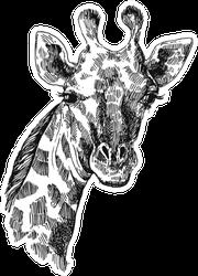 Hand Drawn Illustration Portrait Of Giraffe Sticker
