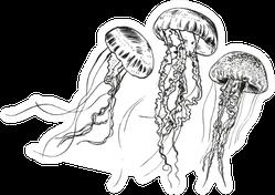 Hand Drawn Jellyfish Sea Collection Sticker