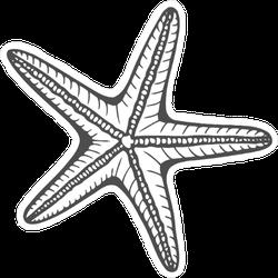 Hand Drawn Marine Starfish Sticker