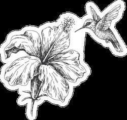 Hand Drawn Monochrome Hummingbird And Hibiscus Sticker