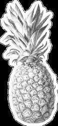 Hand Drawn Pineapple Sketch Sticker