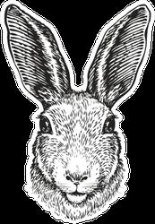 Hand-drawn Portrait Of Rabbit Sticker