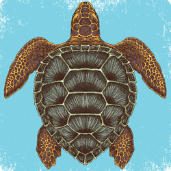 Hand Drawn Sea Turtle Sticker