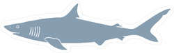 Hand Drawn Shark Sticker