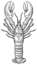 Hand Drawn Sketch Lobster Illustration Sticker
