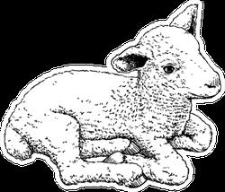 Hand Drawn Sketch Of A Cute Little Lamb Sticker