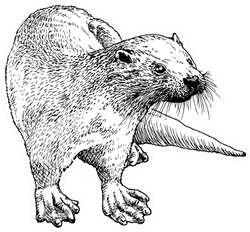 Hand Drawn Sketch Of A Smooth Coated Otter Sticker