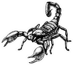Hand Drawn Sketch Of Scorpion Sticker