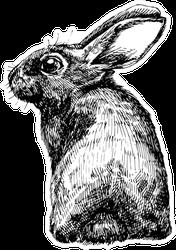 Hand Drawn Sketch Rabbit Sticker