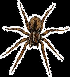 Hand Drawn Spider Illustration Sticker