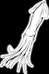 Hand Drawn Squid Sketch Sticker