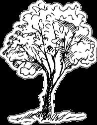 Hand Drawn Tree Sketch Sticker