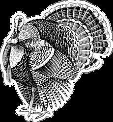 Hand Drawn Turkey Illustration In Retro Style Sticker