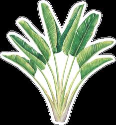 Hand Drawn Watercolor Palm Tree Sticker