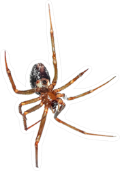 Hanging Spider Sticker