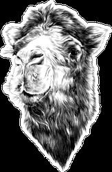 Head Camel Side Profile Sketch Sticker