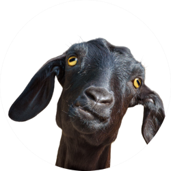 Head Of Funny Silly Looking Black Goat Sticker