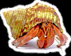 Hermit Crabs Isolated On White Sticker