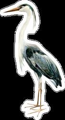 Heron Crane Bird Standing Watercolor Illustration Sticker
