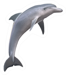 Hi Res Dolphin Isolated Sticker
