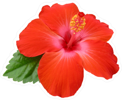 Hibiscus Flower with Single Green Leaf Sticker