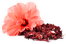 Hibiscus Tea And Flower Sticker