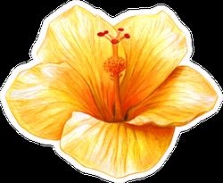 Hibiscus Yellow Drawing Sticker