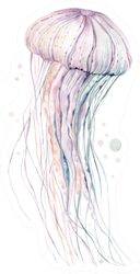 High Quality Watercolor Jellyfish Sticker