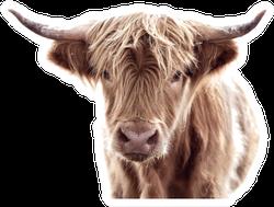 Highland Cow Brown Sticker