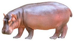 Hippopotamus Isolated On White Background Sticker