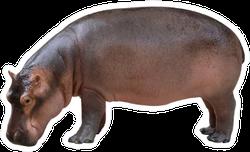 Hippopotamus Side View Sticker