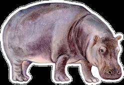 Hippopotamus Watercolor Illustration Sticker