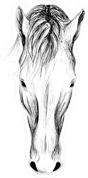 Horse Head Illustration Sticker