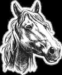 Horse Head Sketch Sticker