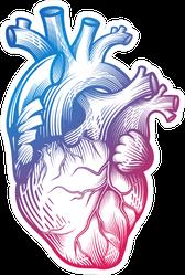 Human Heart In Engraving Technique Blurple Gradient Sticker