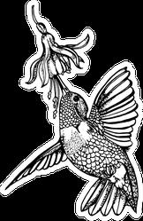 Hummingbird And Flower, Hand Drawing Illustration Sticker