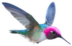 Hummingbird - Calypte Illustration Of A Flying Male Sticker