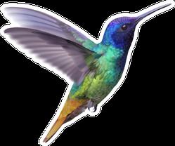 Hummingbird - Golden Tailed Sapphire Hand Drawn Sticker