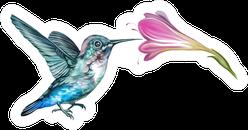Hummingbird (mellisuga Helenae) With Flower Realistic Drawing Sticker