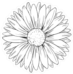 Illustrated Daisy Sticker