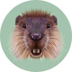 Illustrated Portrait Of Beaver On green Sticker